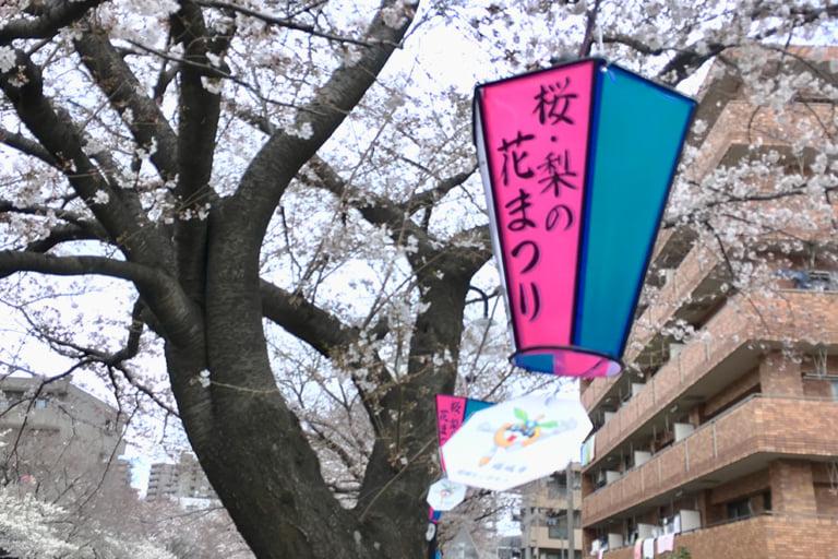 稲城市第9回桜・梨花まつりぼんぼりアップ
