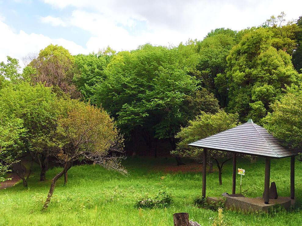 絵本の森ステージ2