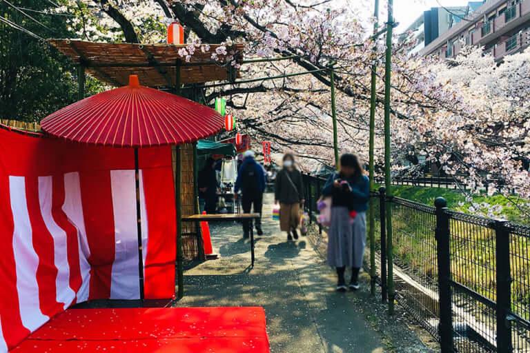 多摩センター桜まつり野点