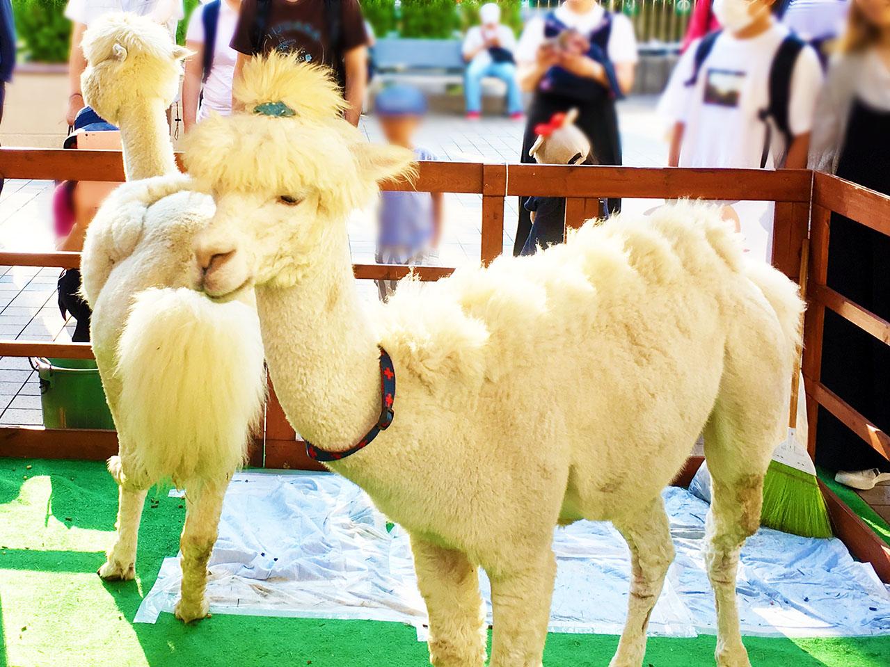 alpaca_in_greenade