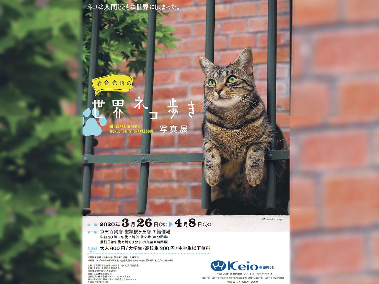 せいせき・ねこフェス3月に開催!岩合光昭の世界ネコ歩き写真展も同時開催