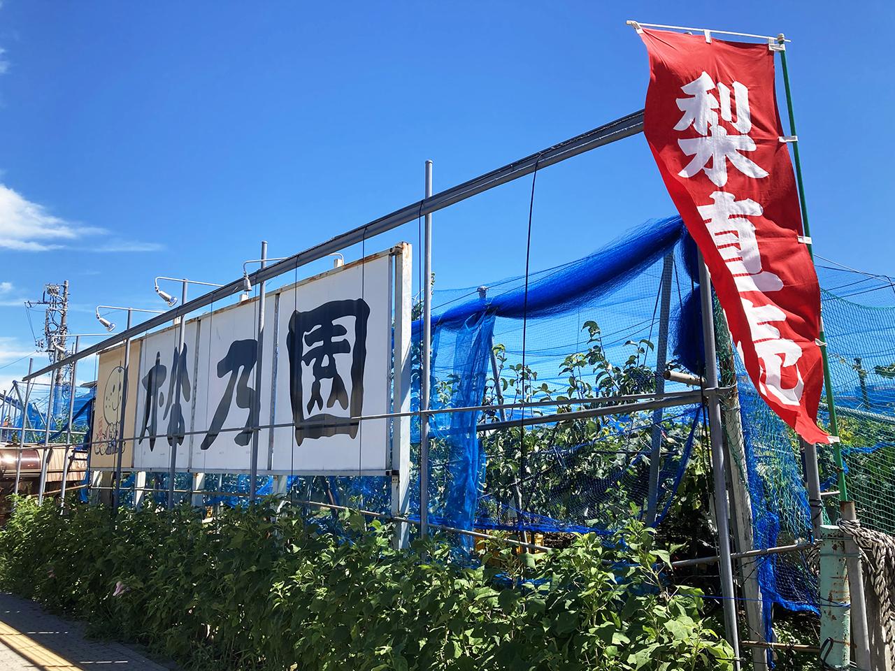 梨の季節到来♪稲城市内の梨直売所が大変盛り上がってます!